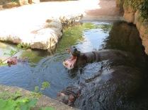 dekriebelopreis hannover zoo erlebnis (1)