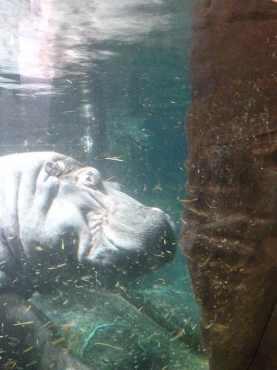 dekriebelopreis hannover zoo erlebnis (12)