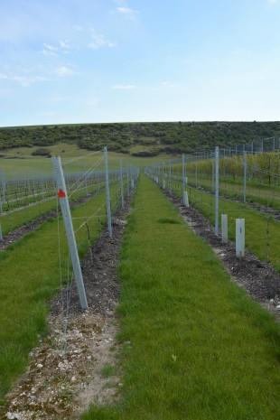 rathfinny wine estate (3)