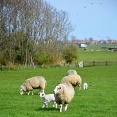 DeKriebelOpReis @Texel boerderij De Waddel (5)